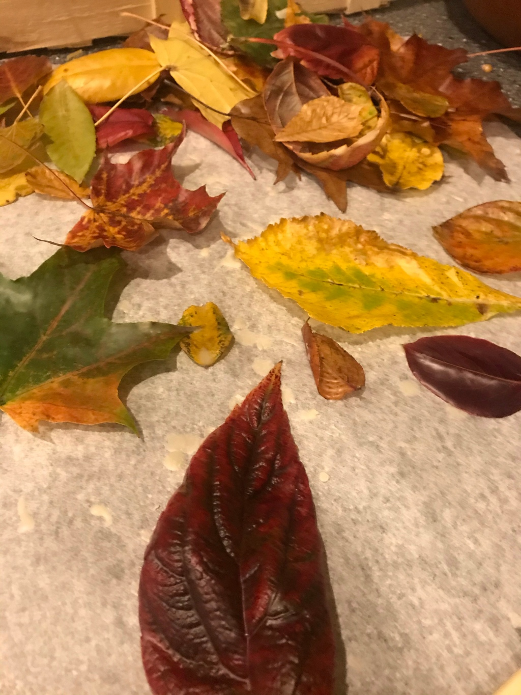Shiny autumn leaves covered in wax on parchment paper